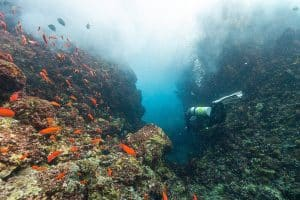diving NitroxDiving PADI