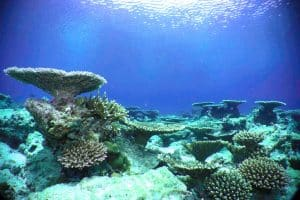 diving_coralGarden_housereef